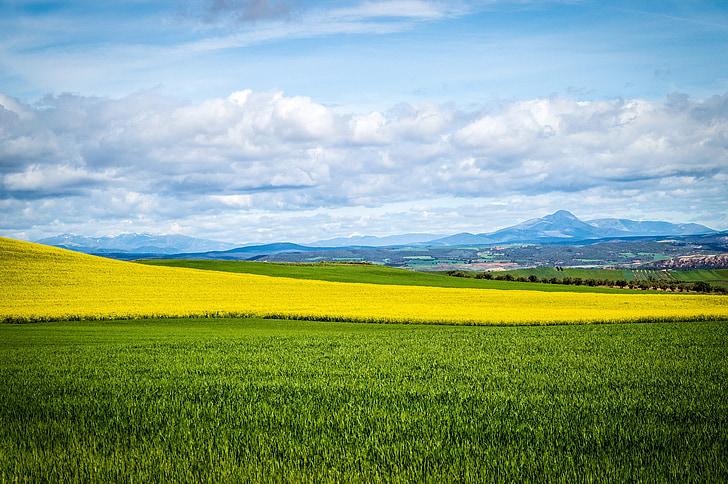 sky, field, blue sky, clouds, landscape, cultivation, agriculture