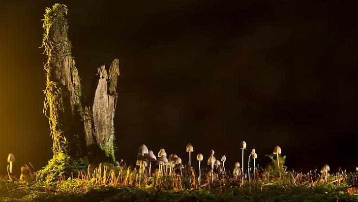 huby, malé huby, huba, Príroda, rastlín, tráva, žiadni ľudia