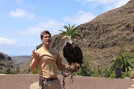 eagle, bird, beak, wild