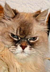 cat, cat face, head, cat's eyes, curious, animals, animal