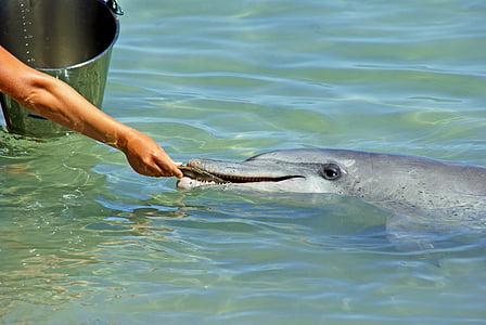 kuva, harmaa, Dolphin, syöminen, liha, kala, käsi