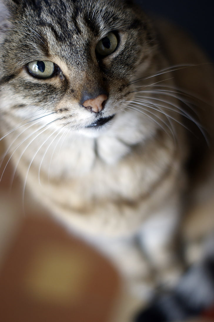cat, look, moustache, bokeh, animal, feline, cat face