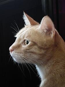 cat, gel reviews, cat mia, lateral face, pet