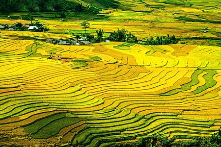 terrasses d'arròs, camps d'arròs, amb closca, camps, adossada, colorit, MU cang chai