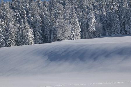 winter, snow, wintry, nature, light, shadow, snow landscape