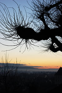 Bamberg, Alba, morgenstimmung, vermell, arbre, torna la llum, l'hivern