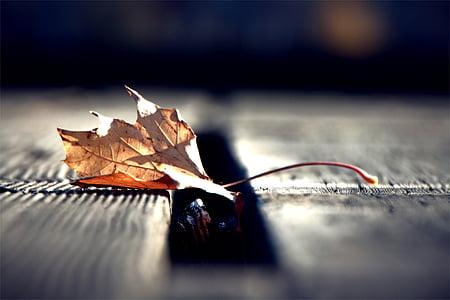 φύλλο, το φθινόπωρο, φθινοπωρινά φύλλα, πτώση, φύση, καφέ, σεζόν