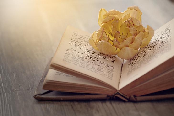 llibre, tipus de lletra, vell, pàgines del llibre, llibre antic, flor, flor