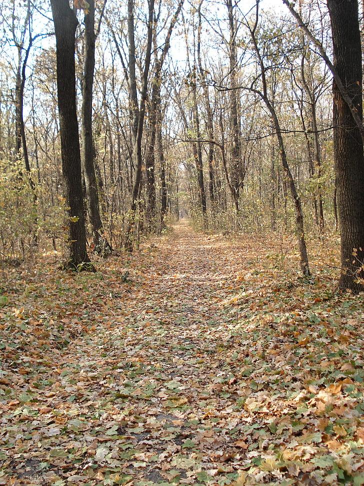 lasu, drogi leśne, Jesienne liście, drzewa, Natura, sezon, pozostawia
