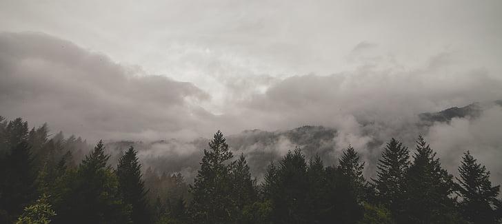 arbres, boira, núvols, paisatge, bosc, boira, llum