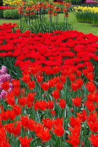 Kaunis, lill, voodi, Bloom, lilled, Värv, Värviline
