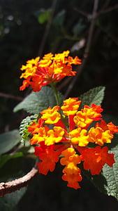 花, 花, 自然, イエロー, 黄色の花, 赤い花