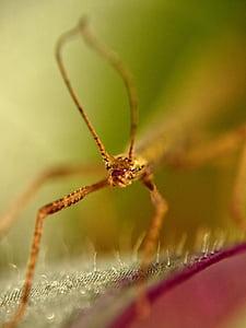 stick insect, insect, antennae, deep, sharpness, macro