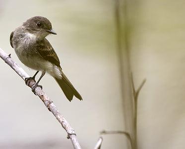 птица, дива природа, природата, животните, диви, перо, крило