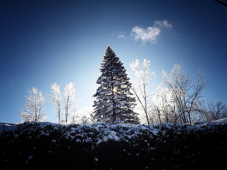 tempesta de gel, l'hivern, gelades, glacial, glaçat