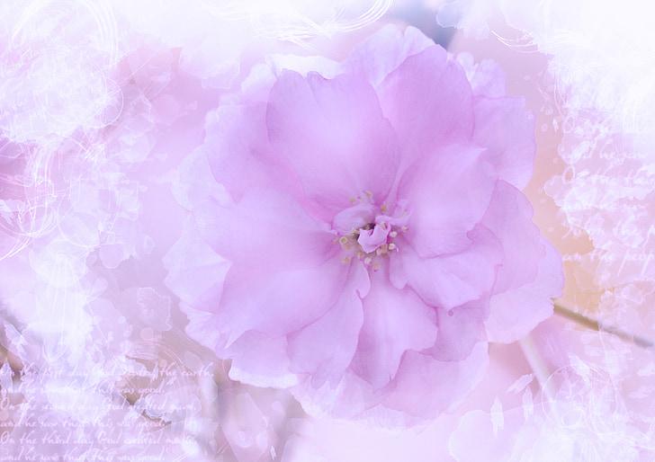 flor, flor, flor, pintura, romàntic, tipus de lletra, fons