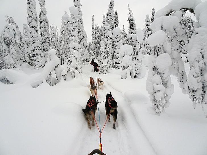 Finska, pozimi, zimski, Lapland, hladno, sneg, zasneženih