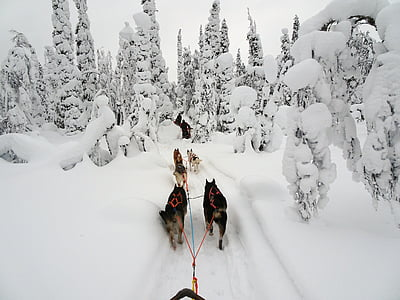 finland, winter, wintry, lapland, cold, snow, snowy