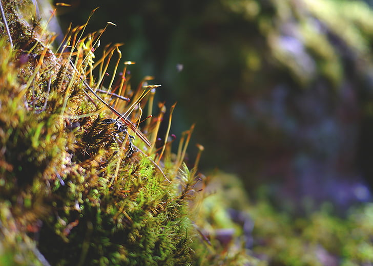 moss, forest, bemoost, fairy tale forest, nature, green, forest floor