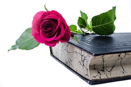 flor, flors, Rosa, llibre, l'amor, decoració, natura