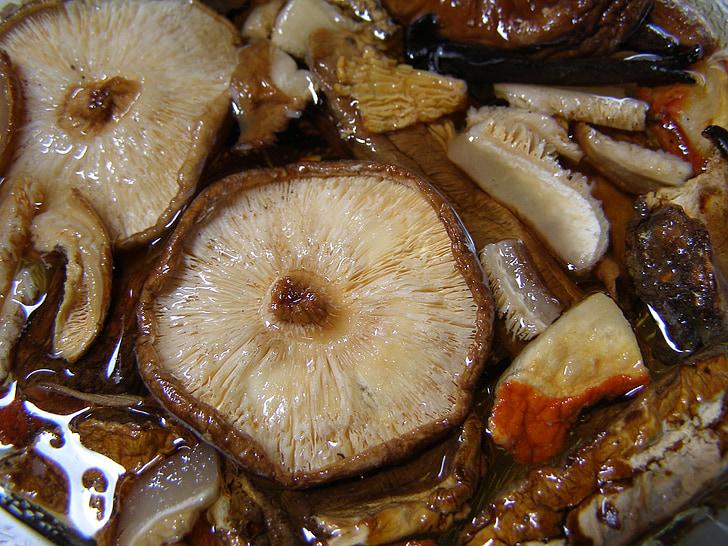 seened, shiitake, seen, toidu, pruun, terve, taimetoitlane