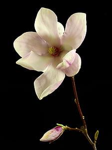 puķe, zieds, Bloom, Pavasaris, daba, augu, koks