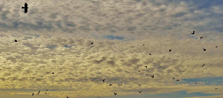 cel, núvols, ocells, volar, eixam