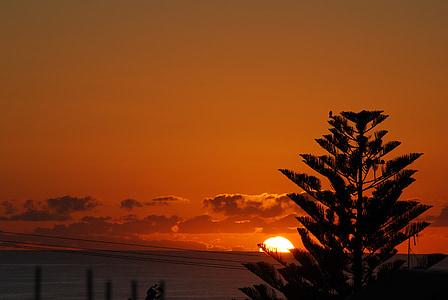 träd, soluppgång, soluppgång landskap, Dawn, Ocean, Orange himlen, kvällen
