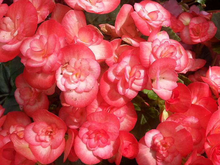 Oxfordshire, flors, floral, plantes, natural, flor, flor