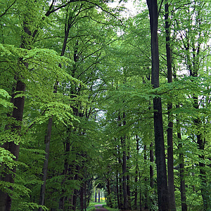 forest, leaves, green, forest path, nature, plant, tree