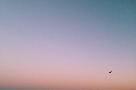 птица, плаващи, залез, небе, лилаво, розово, самолет