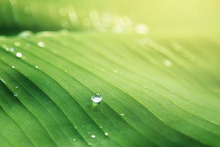 Natura, zielony, liść, wody, kropelki, rosy, upuść