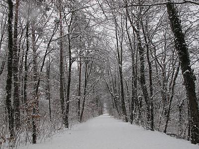 floresta de inverno, floresta, neve, Inverno, invernal, frio, natureza