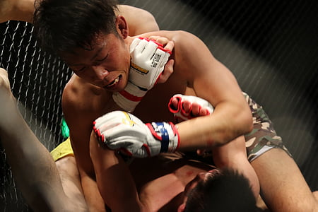 MMA, grachan, arts marcials mixtes, Japó, arts marcials, gàbia, guants