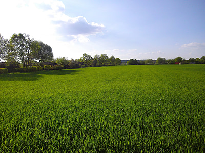 Пролет, орни, природата, небе, царевицата