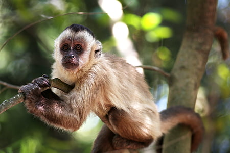 mico, les ungles, en la branca, animal, primats, salvatge, hàbitat natural