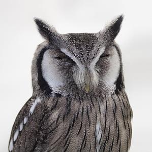 animal, animal photography, bird, close-up, owl, wildlife, nature