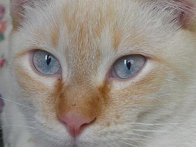 felino, gato, animales, ojos, cara de gato, lindo gato