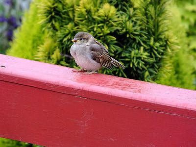 sparrow, bird, balcony