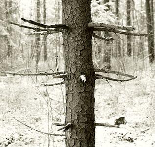 arbre, waldsterben, equilibri ecològic, protecció del medi ambient, sensible, contaminació, protecció de l'arbre