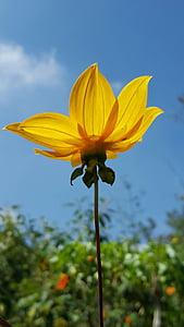 flors, flor groga, primavera, contra la llum, cel, natura, groc