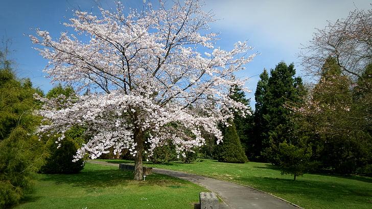 garden, tree, spring, nature, botanical garden, beautiful, sunbeam