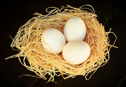 ou, ous blancs, Nutrició, ous de gallina, menjar, aliments, Niu d'animals