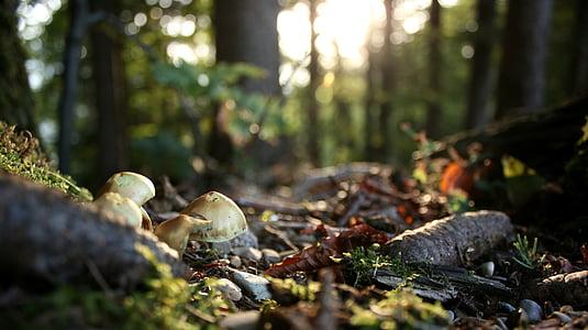 sotabosc, estat d'ànim tardor, tardor, bosc, bolets, colors de la tardor, fulles