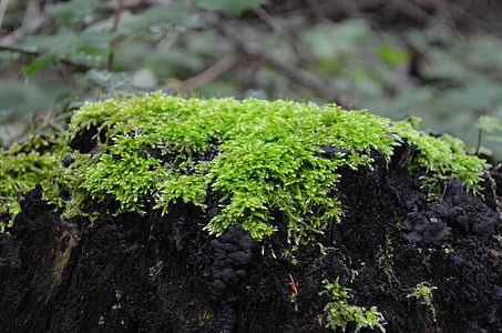 molsa, verd, arbre, registre, bosc, tardor, sotabosc