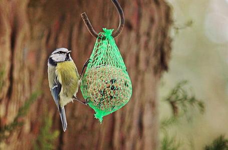 син синигер, синигер, птица, животните, природата, малки птици, хранене