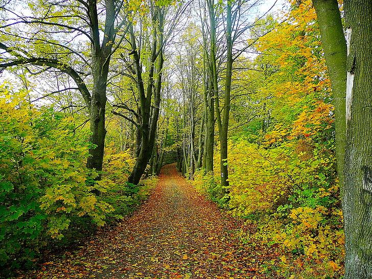 carretera, bosque, árboles, árbol, viaje, naturaleza, hojas