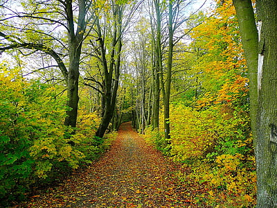 road, forest, trees, tree, trip, nature, leaves
