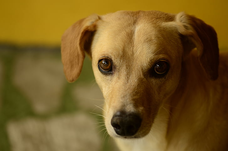 dog, posing, half shadow, dog eyes, dog face