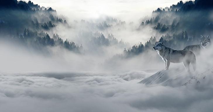 Волк, волки, Снежный волк, пейзаж, атмосфера, Животный мир, Хищник